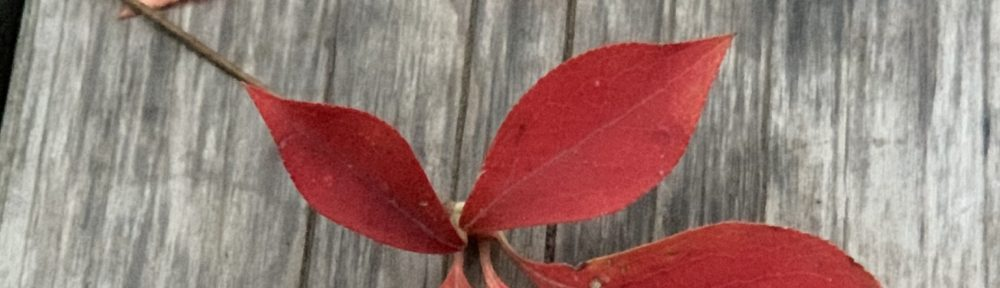 winter-leaf2